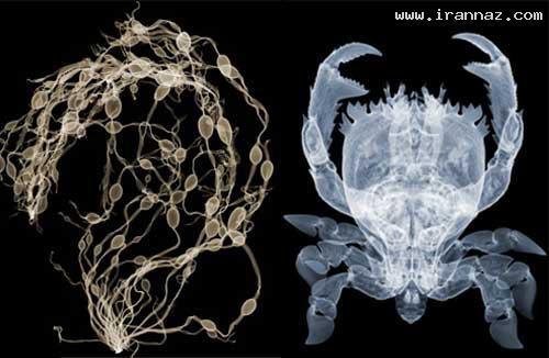 عکسهای بسیار شگفت انگیز از عکاسی با پرتو ایکس