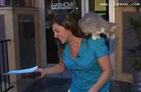 سوتی خانم گزارشگر با گربه در برنامه ی زنده +عکس