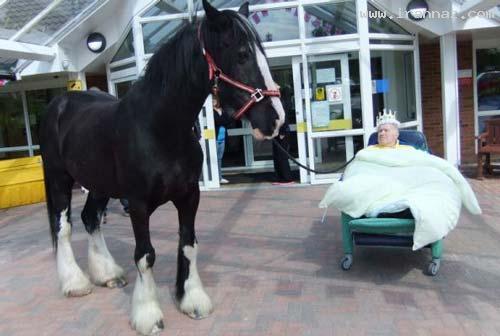 آرزوی عاطفی و جالب یک پیرمرد قبل از مرگ! +عکس