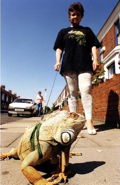 عکسهای حیوانات خانگی بسیار عجیب و غریب