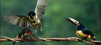 برترین عکس های زیست محیطی سال 2010