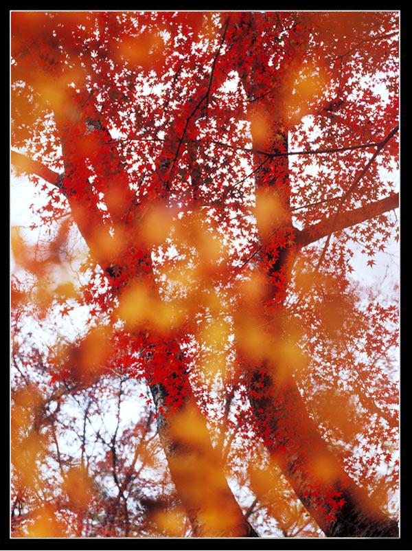 عکس هایی زیبا و بی نظیر از فصل پاییز