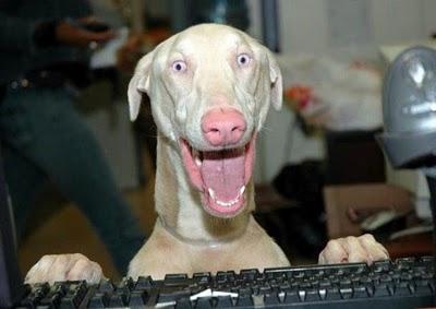 عکس های جالب و خنده دار از حیوانات