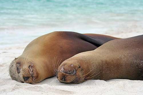 عکس هایی زیبا از خواب حیوانات