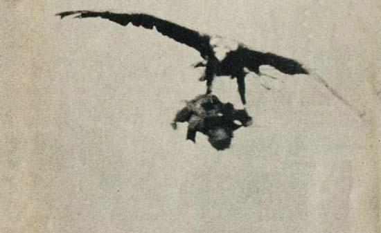 شکار پسر بچه ای 3 ساله توسط یک عقاب!! +عکس