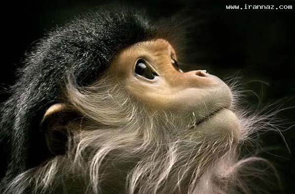 عکس هایی از هنرنمایی خداوند در خلق موجودات زیبا