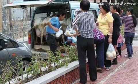 عجیب و خنده دارترین روش برای فروش شیر!! +عکس