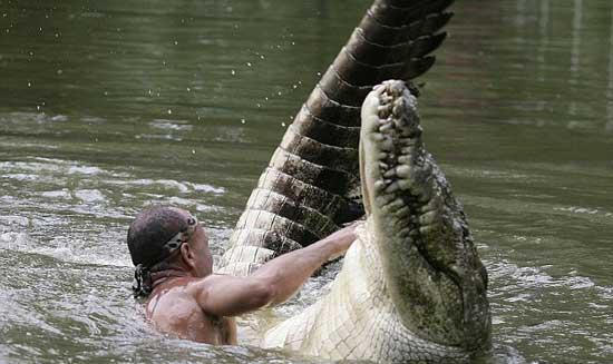 تصاویری فوق العاده از دوستی یک انسان با تمساح!!