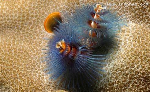 عکس های هنرنمایی خداوند در آفرینش دنیای زیر آب