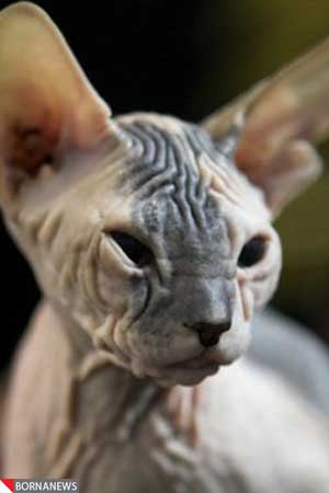 زشت و بدشکل ترین حیوانات جهان را ببینید! (+عکس)