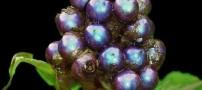 کشف شدن رنگارنگ و زیباترین میوه در جهان +عکس