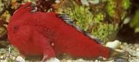 کشف ماهی بسیار عجیب که میتواند راه برود +عکس