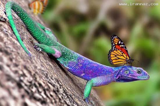 عکس های بسیار زیبا از قدرت خداوند در خلق رنگ ها