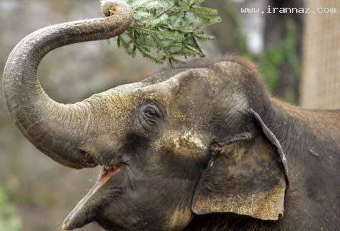 حیواناتی زیبا و بانمک ولی مهلک و بی رحم! (+عکس)