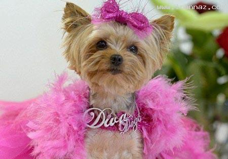 این سگ وارث یک خانم میلیاردر شده است (+عکس)