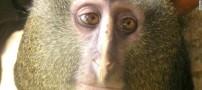 میمونی جدید با صورتی شگفت انگیز و جالب (+عکس)