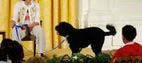 همسر اوباما: اگر باراک نباشد با سگ مان میخوابم!!