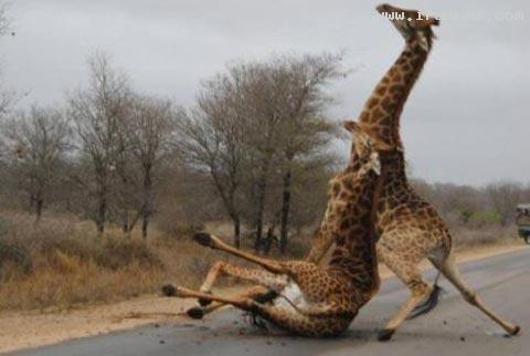 عکس های بسیار دیدنی از شکار لحظه های دلهره آور