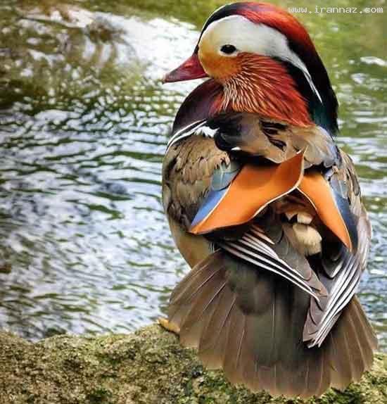 عکس های بسیار زیبا از قدرت خداوند در خلق رنگ ها ، www.irannaz.com