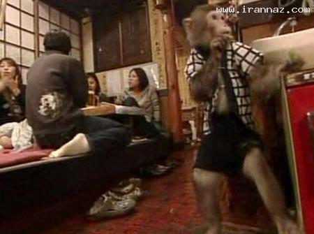 رستورانی عجیب با گارسون های میمون! (+عکس)