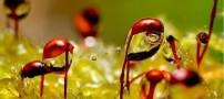 حیرت انگیز و هنرمندانه ترین تصاویر قطرات باران و نور