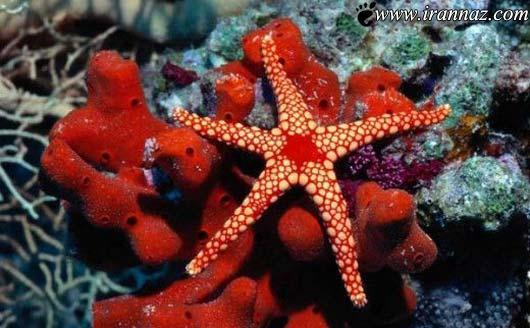 عکس هایی رنگی و خارق العاده از اعماق اقیانوس ها