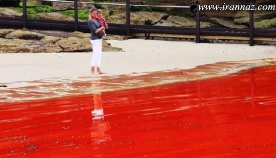 عکس هایی زیبا و باورنکردنی از دریای خون در استرالیا