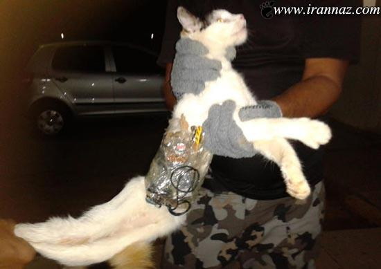 وقتی گربه ها هم خلافکار میشوند و به زندان می افتند!!