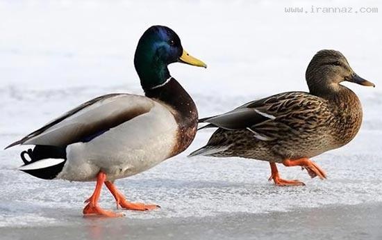 عکسهای بسیار زیبا از عشق و دوستی میان حیوانات
