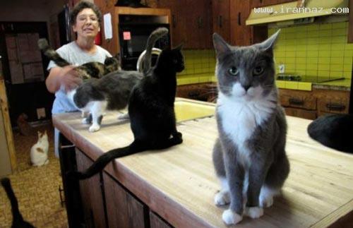 زندگی مشترک و باورنکردنی یک خانم بیوه با 800 گربه