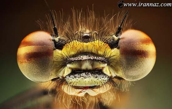 اطلاعات جالب و تصاویر شگفت انگیز از چشم حشرات