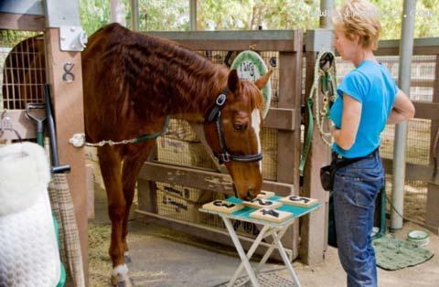 اسبی باهوش که مردم دنیا را شگفت زده کرده است!