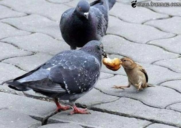 تصاویر بسیار دیدنی که بیشتر از یک عکس ارزش دارند!!