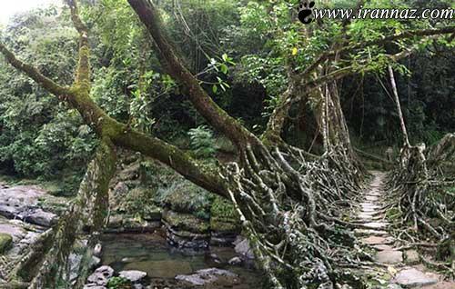 عکس هایی از عجیب و ترسناک ترین پل جهان