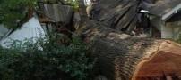 عکس هایی خنده دار از احمقانه ترین راه قطع درخت!!