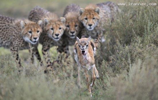 بهترین عکس های منتخب حیات وحش در سال 2012