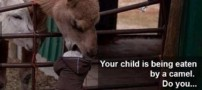 شتری که جلو عکاس سر یک کودک را خورد !! (تصویری)