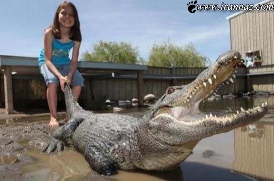 شجاعت عجیب و باورنکردنی یک دختر 6 ساله!! (عکس)