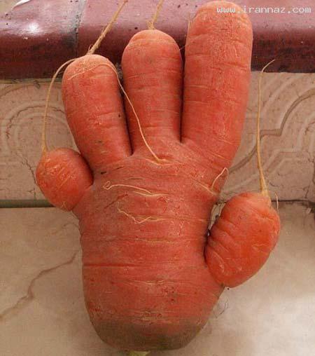 عکس هایی دیدنی از هویج های بامزه و جالب