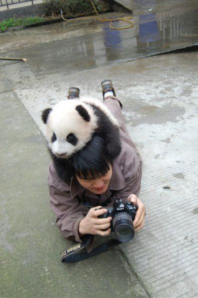 عکس های بسیار خنده دار، دیدنی و متفاوت
