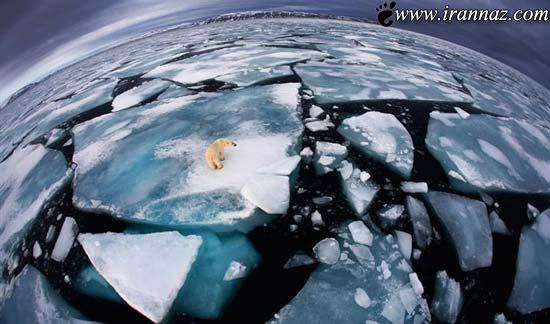 برترین عکس های علمی جهان به انتخاب مجله نیچر