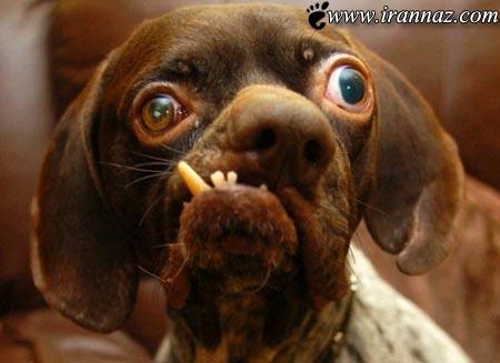 اگر سگ ها به اداره میرفتند چی میشد (طنز تصویری)