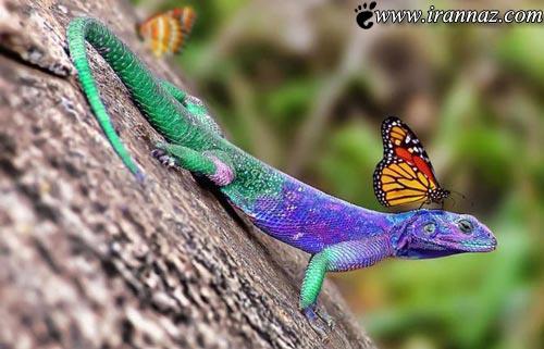 عکسهایی زیبا و دیدنی از هنرنمایی خدا در خلق رنگ ها