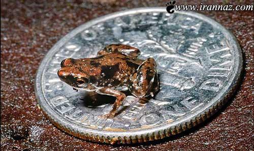 عجیب ترین موجودات کشف شده جهان در سال 2012