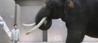 حیرت زده شدن دانشمندان از یک فیل که حرف میزند!!