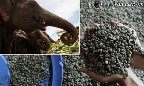 با گران ترین مواد غذایی در جهان آشنا شوید (عکس)