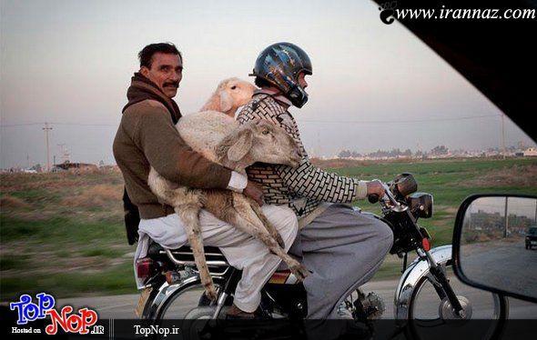 عکس های بسیارخنده دار از احمقانه ترین کارهای ممکن
