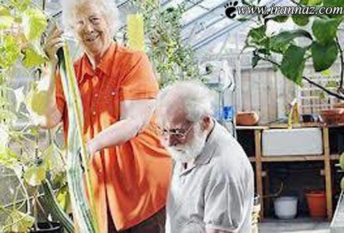 این زن 78ساله رکورد بزرگترین خیار جهان را شکست