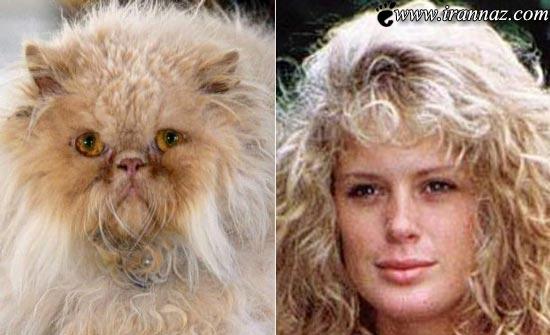 عکس های خنده دار از گربه هایی شبیه افراد مشهور!