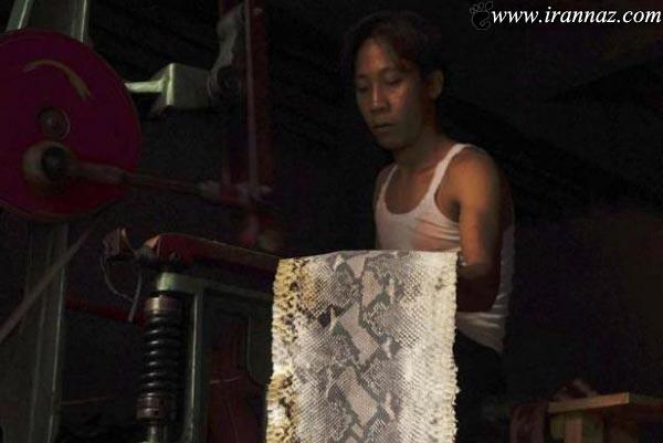 تصاویری عجیب و دیدنی از تولید کیف با پوست مار